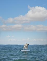 Dog Surfing on Boogie Board