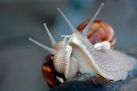 snail love story
