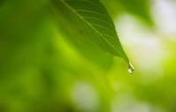 Last Drop of Rain