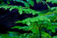 little fern detail