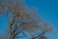 Branches of trees against the blue sky in autumn