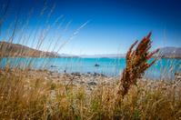 Lake view, Lake Tekapo, South Island - New Zealand