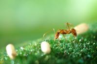 Macro Photography - ants