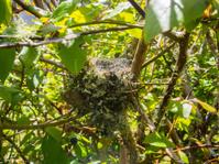 Birds Nest In A Bush