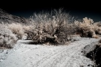 Moonlight Desert Saguaros