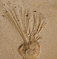 Sand bomb