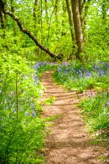 Springtime forest path