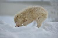 Little white dog outdoor in winter