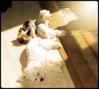 Sunshine Dogs