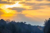 Sunrise above the trees