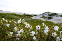 outer banks beach dunes scenes