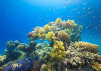 Coral Garden Red Sea