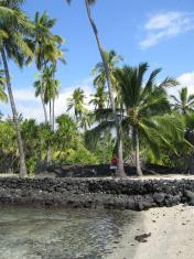Tourist under a shady palm