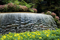 Flowers and Waterfall 01