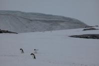 Die Antarktis