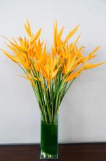 bird of paradise flowers in vase