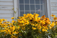 Flowers/Window