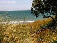Grassy Dunes to Beach