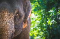 Elephant's face