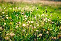 grass flowers.