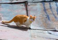 Red little kitten on roof