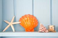 decoration with shellfish, beach style decoration
