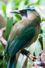 exotic blue cyan bird