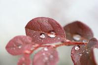 One Sharp Red Leaf