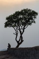 Monkey_tree_hampi_hanuman