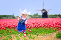Beautiful girl in Dutch costume on tulips field with windmill