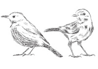 Hand drawn bird Vector Illustrations