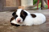 Puppy sleeping on the cement floor.