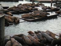 Lounging Seals
