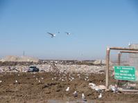 Landfill - Muddy, Seagulls, Windtrap