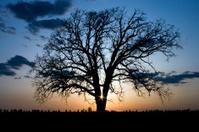 Silhouette, Tree, Sunset