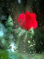flor detrás de un vidrio