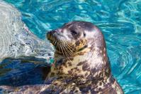 Habor Seal Sunning