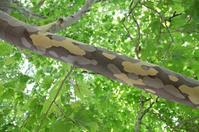 Masked tree