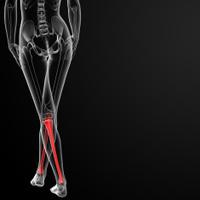 3d rendered illustration of the female tibia bone