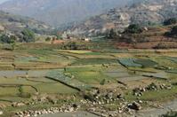Landwirtschaft und Reisterrassen in Nepal