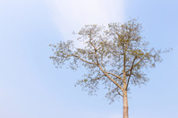 Summer Tree Branch