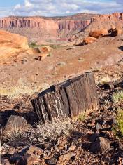 Petrified wood, Utah, USA