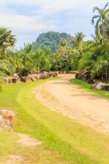 Palm tree pathways