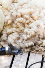 Sheared Wool