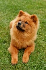 Stella dog