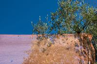 Network for the olive harvest