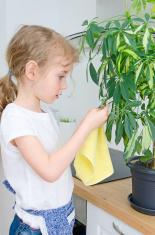 Little girl wipes dust from the flower leaves.