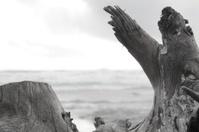 Driftwood Framing Ocean