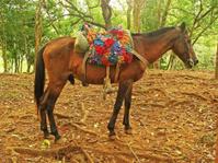 Horse at way-station, El Salto de Limon waterfall