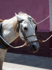 Horse head in reins, Cardenas, Cuba